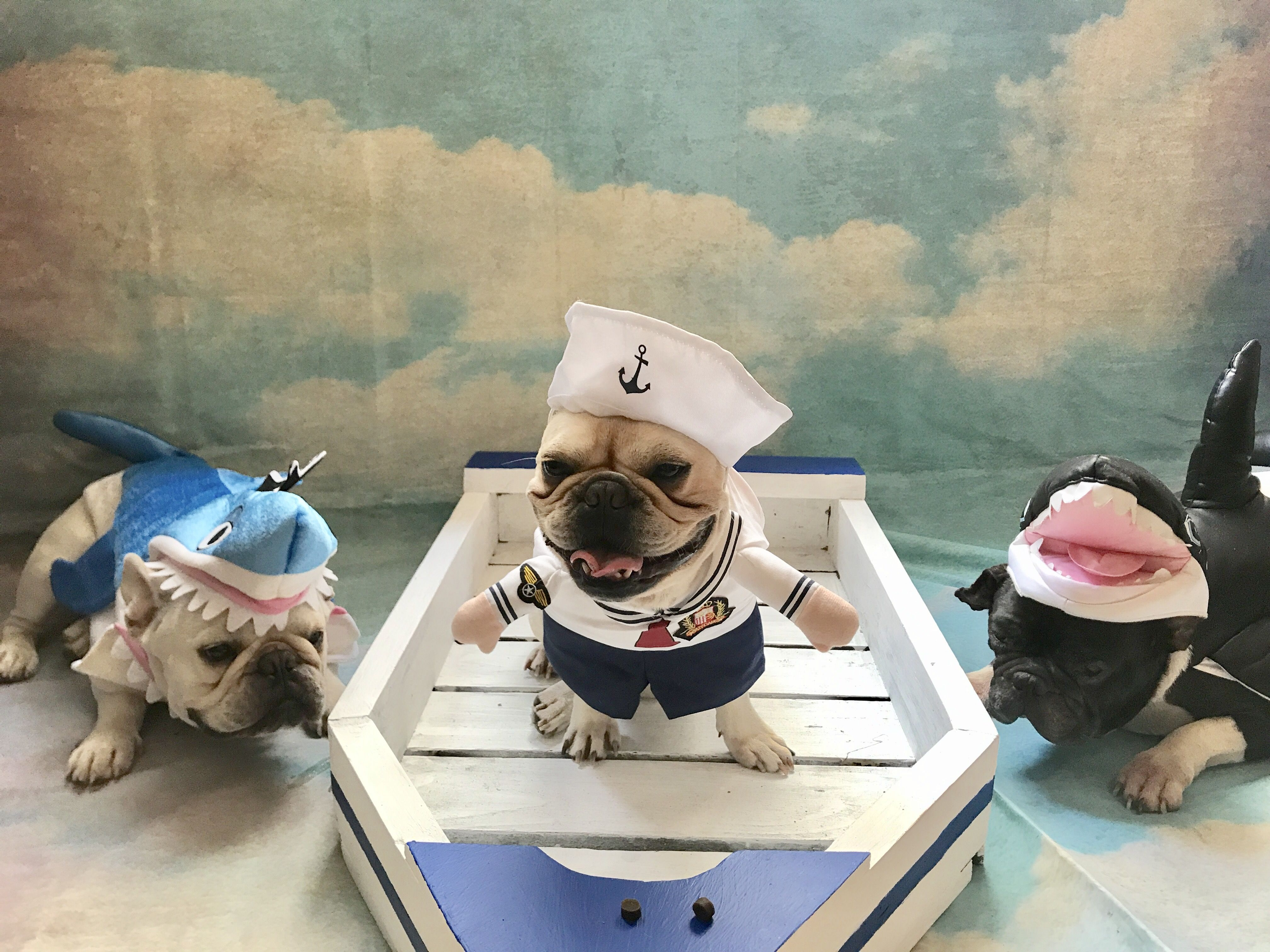 Julio Roberto And Chico French Bulldogs In Sailor Suit Costumes
