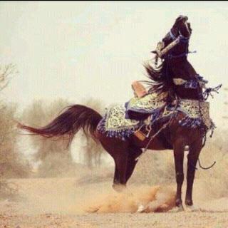 صور خيول رمزيات خيول جميلة خلفيات خيول 2016 Beautiful Arabian Horses Horses Arabian Horse
