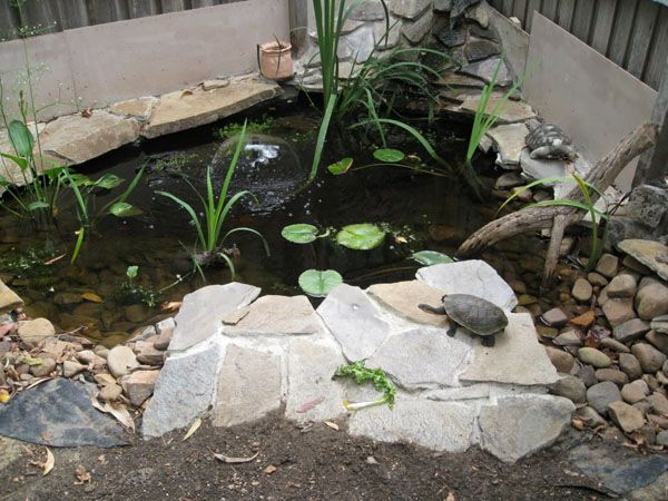Turtle ponds turtle pond ideas for Make your own pond filter box
