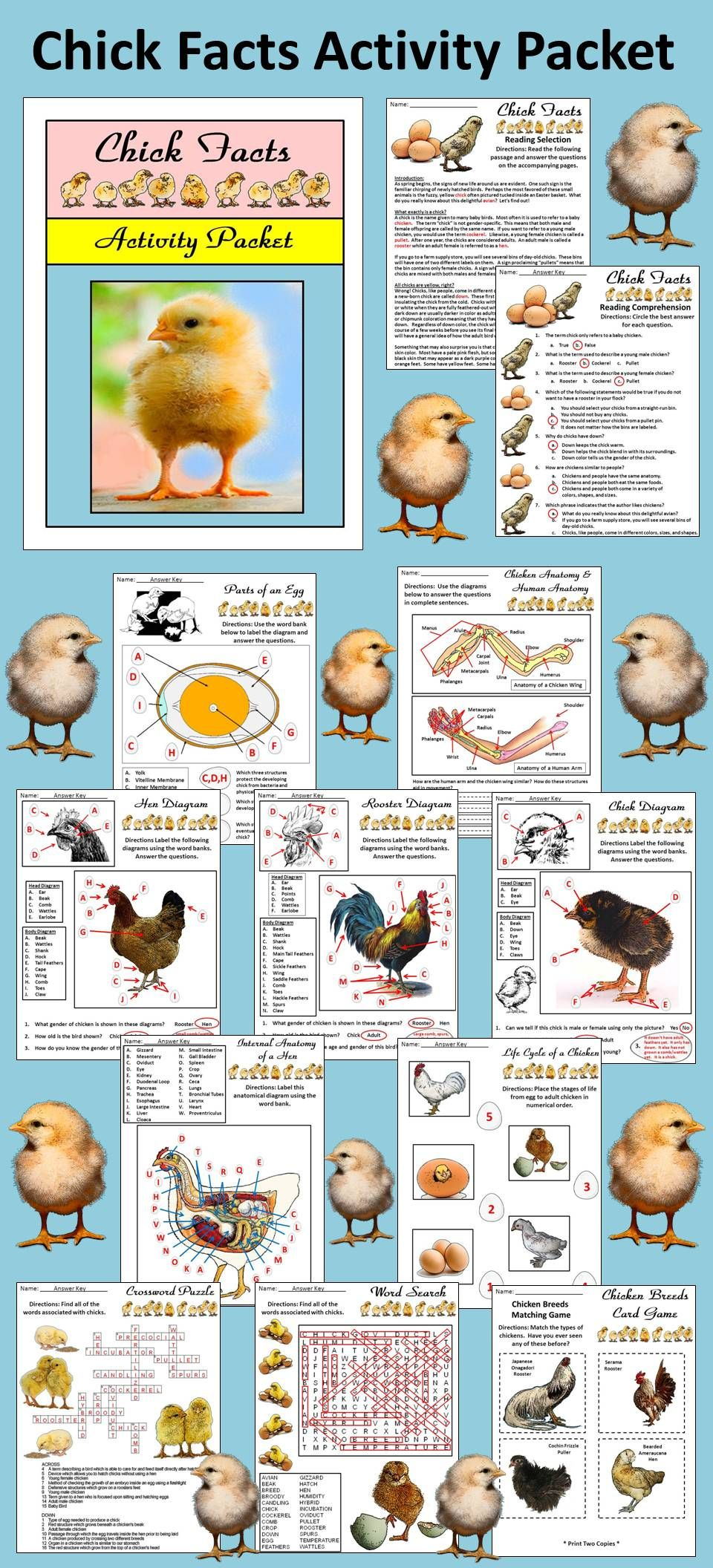 Easter Activities: Chick Facts Spring Activity Packet | Chicken ...