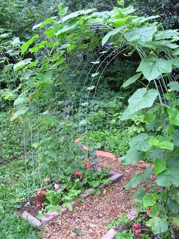 Une Arche Ou Grimpent Les Concombres Idees Jardin Jardin