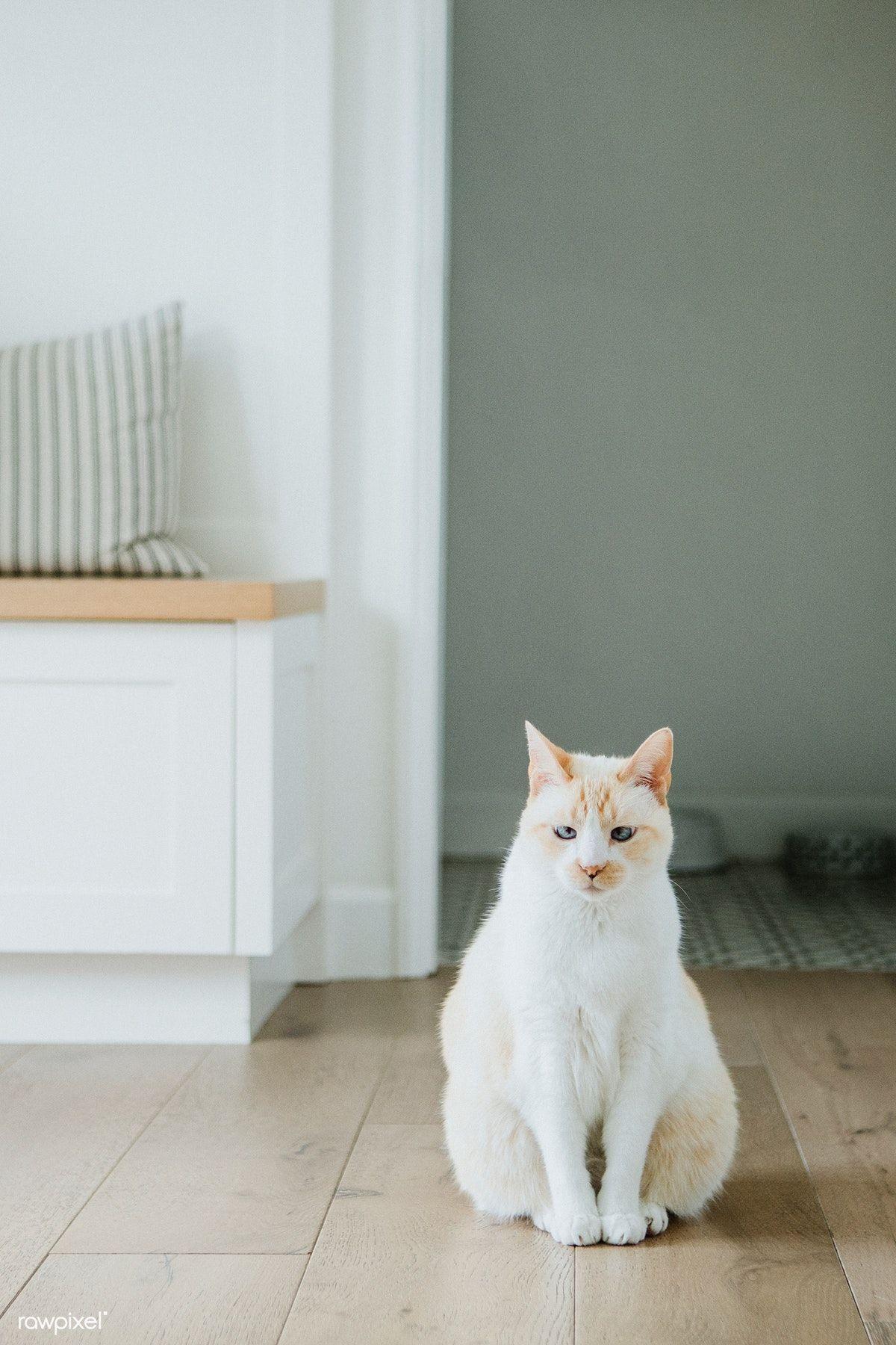 Pet Cat Sitting On Hardwood Floor