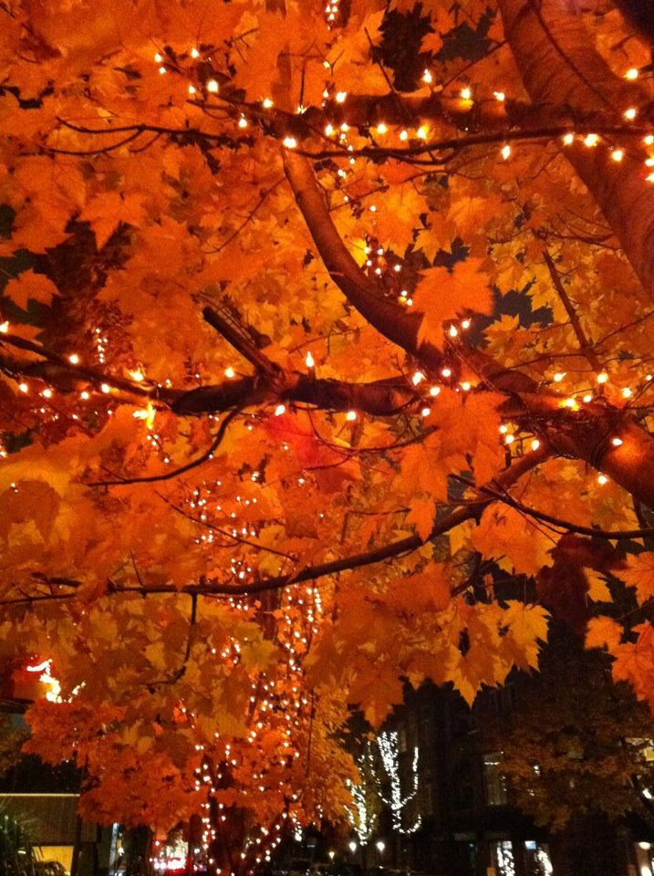 Beautiful Fall Trees With White Lights Very Pretty Fall Trees Photography Beautiful Fall Autumn Nature