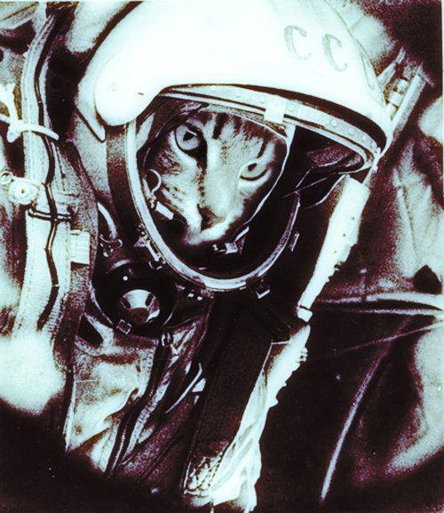 Feline Cosmonaut