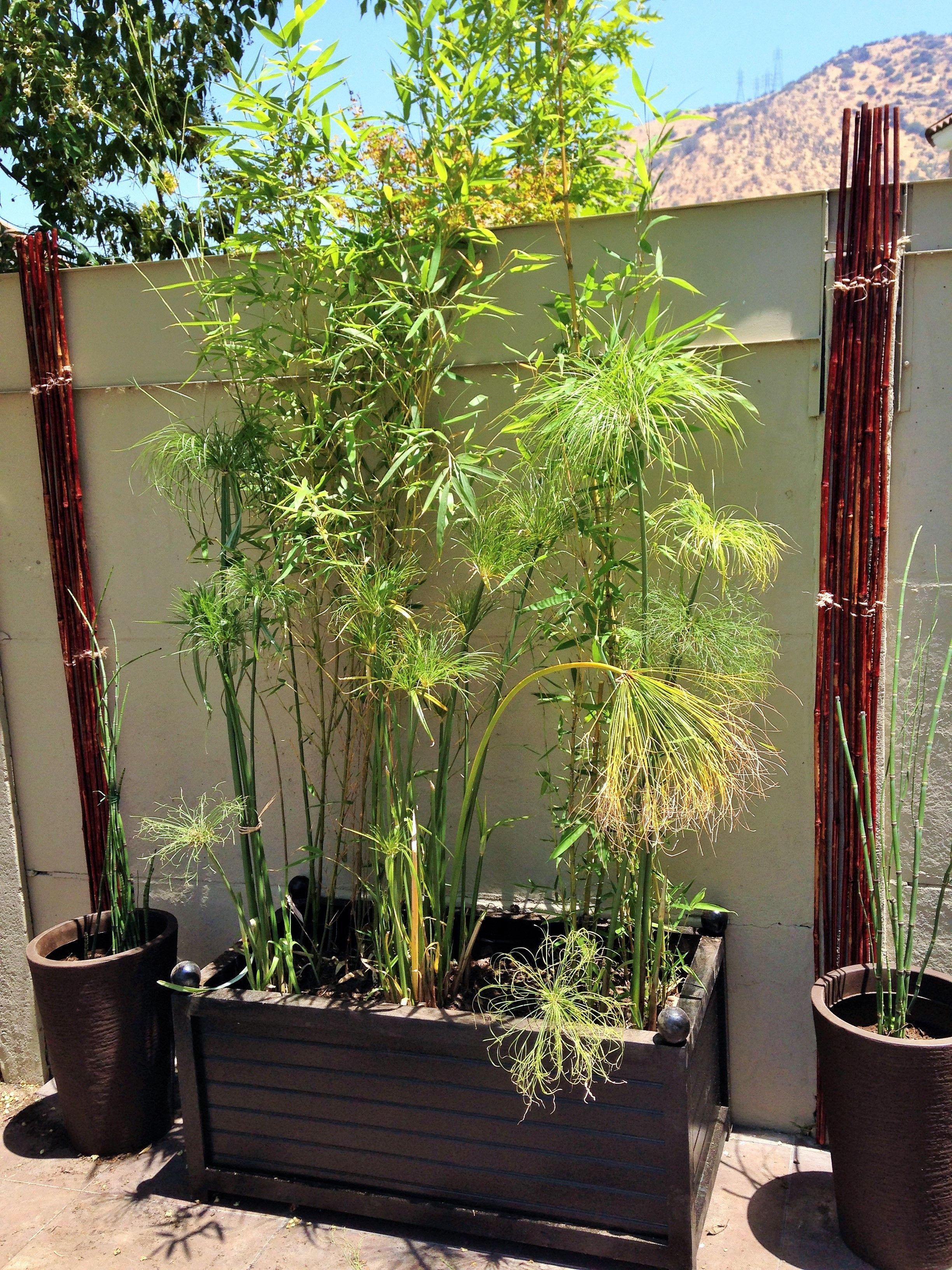 Siguiendo el mismo estilo oriental se uni el bambu con - Bambu cuidados en maceta ...