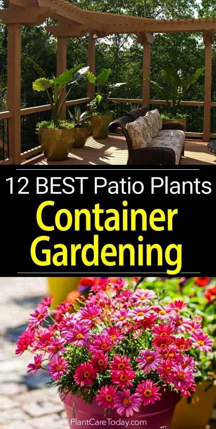 Gartentipps pro Zapfen Indien Gartenarbeit pro Zapfen Im Frühjahr ga, #gardentipsforbeginnerssp …  – Gartentipps Für Anfänger Blog