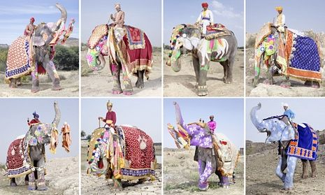Mahouts pose with their painted elephants in a rehearsal for the annual Jaipur festival, organised by the local tourist board. The festival includes a procession, tug of war, races and polo match. The elephants spend the rest of the year ferrying tourists around.