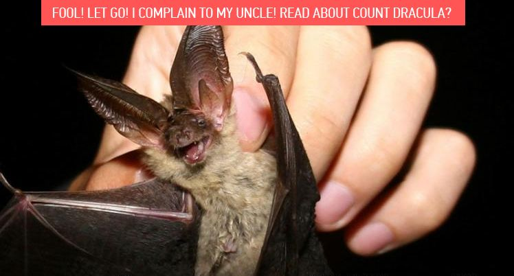 Fool! Let go! I complain to my uncle! Read about Count Dracula?
