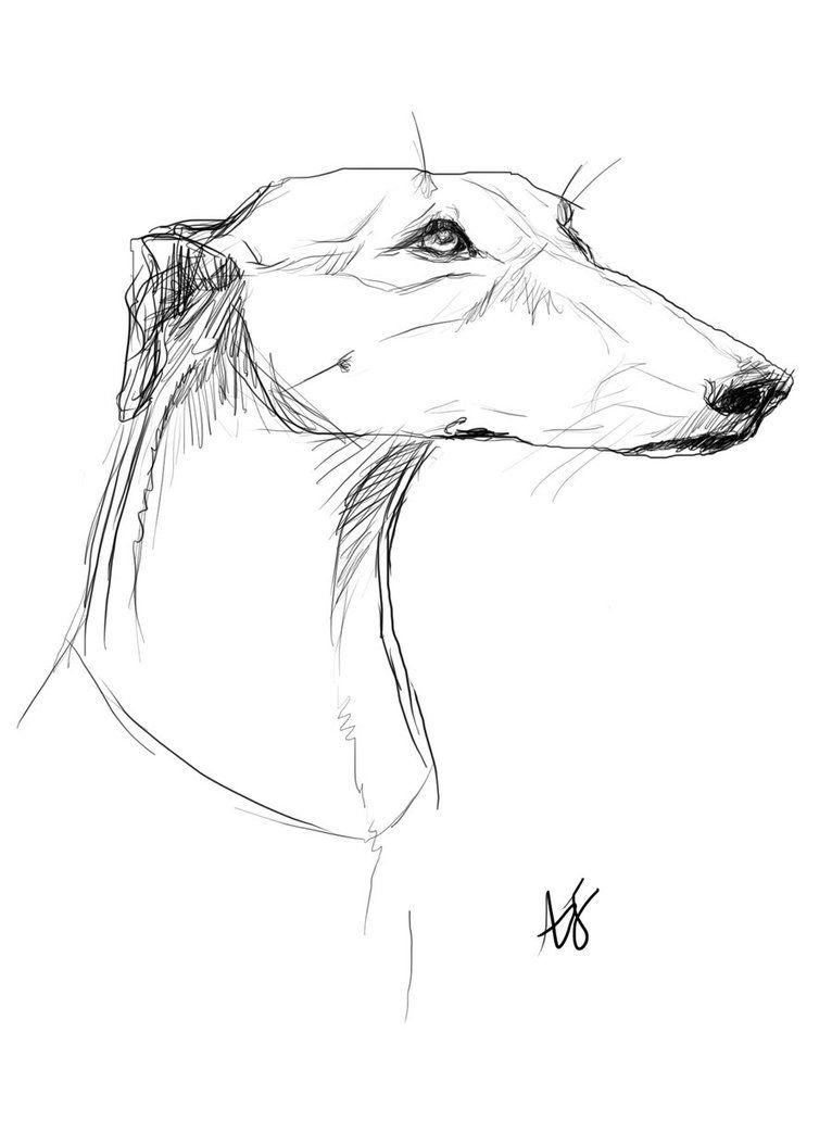 Greyhound By Annabola On Deviantart Greyhound Tattoo Greyhound