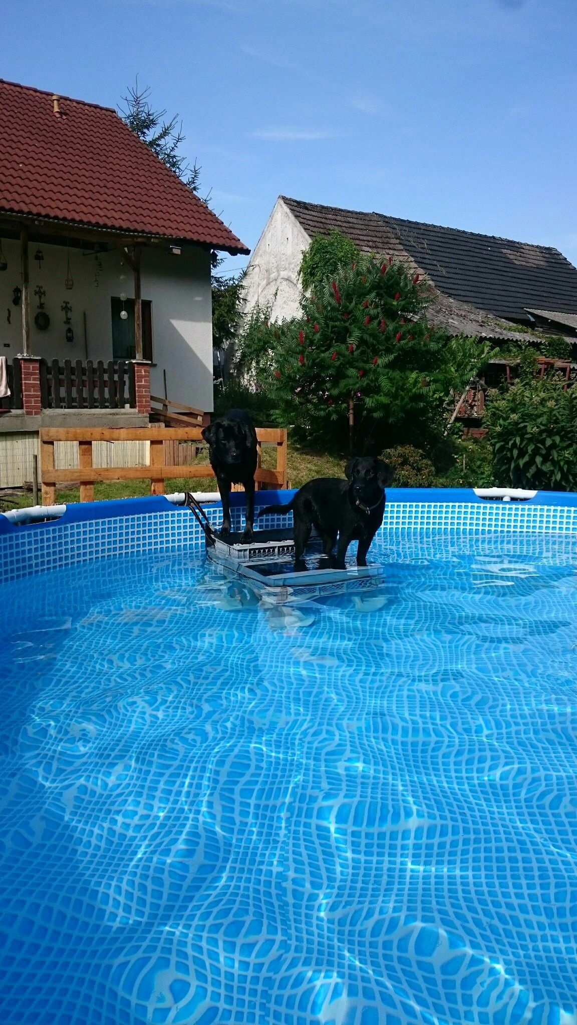 Diy Swimming Pool Dog Stairs Dog Ramp Alison