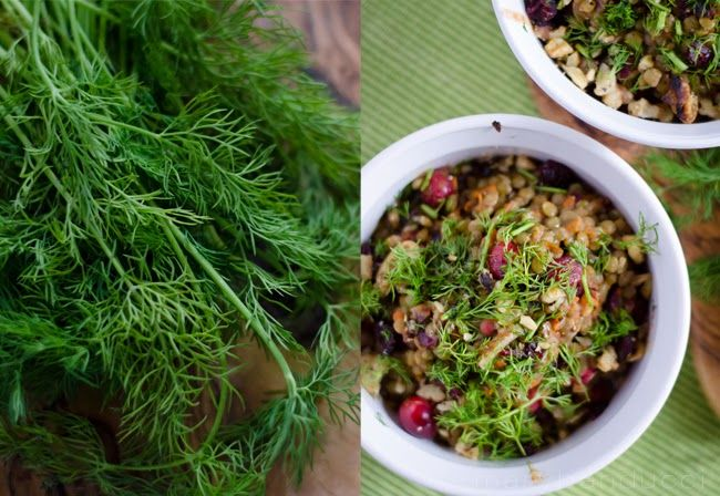 Dill for Cranberry Lentils with fresh Dill & Toasted Walnuts