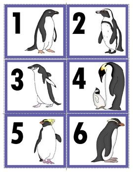 Freebie Two Sets Of 17 Types Of Penguin Number Cards1 20 Types Of Penguins Penguins Polar Animals