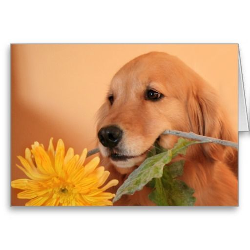 Contribution To Marie Curie Save The Children Golden Retriever