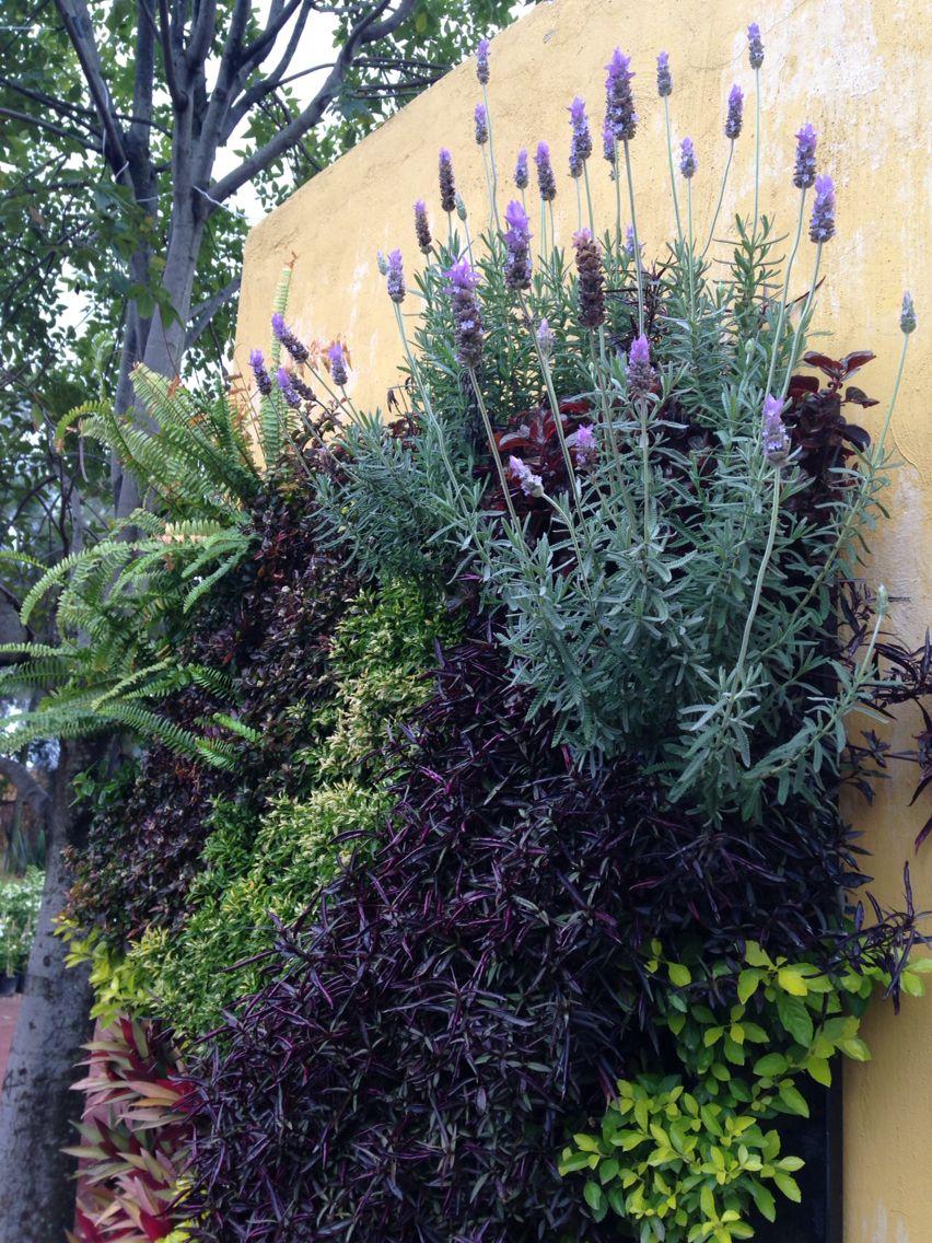 muro verde jardin vertical lavanda all green propios pinterest. Black Bedroom Furniture Sets. Home Design Ideas