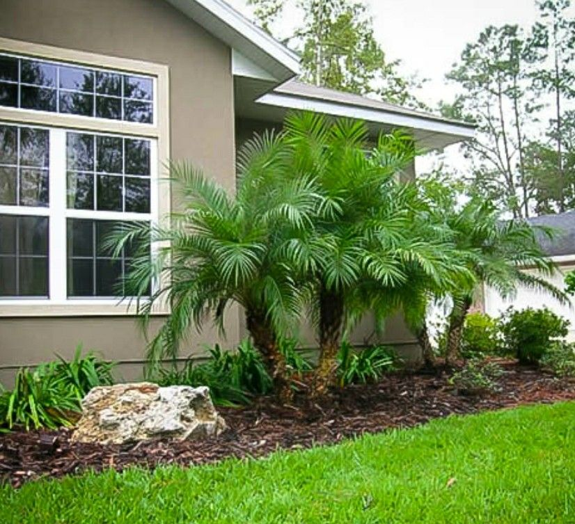 Pygmy Date Palm Front Yard Garden Design Small Front Yard