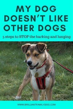 My Dog Doesn T Like Other Dogs 5 Steps To Stop The Barking And Lunging Dog Training Obedience Aggressive Dog Dog Behavior