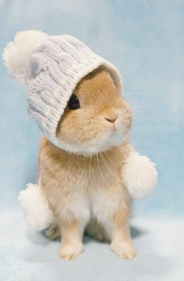 Omg Bunny In A Hat Animais Bebes Mais Fofos Bichinhos Fofos