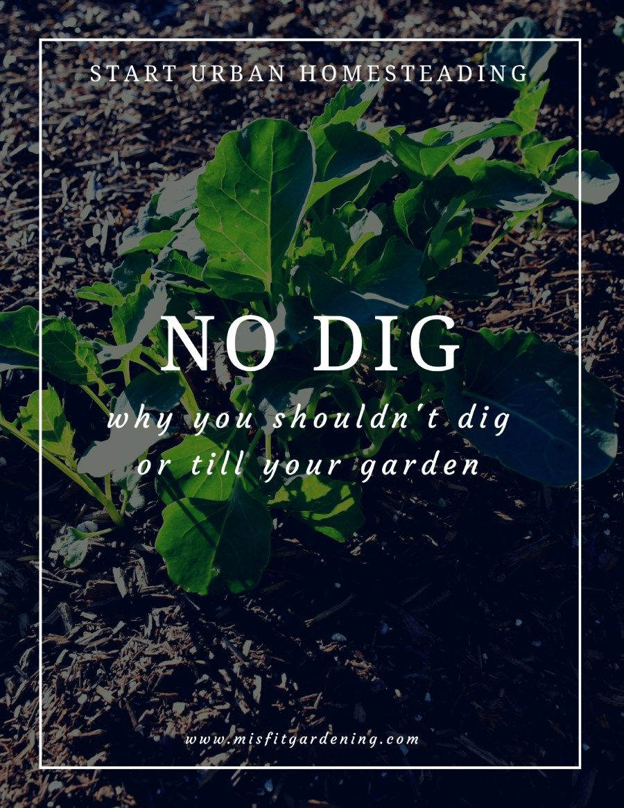 No dig vegetable gardens with raised garden beds - No Dig Why You Shouldn T Be Digging Or Tilling Your Garden Biodynamic Gardeningvegetable
