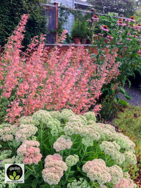 75+ Best Planting Combination Ideas For Beautiful Garden
