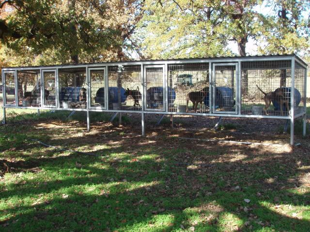 multiple dog above ground dog kennel dog kennels With in ground dog house