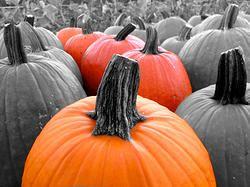 Pumpkin Patch # 00319