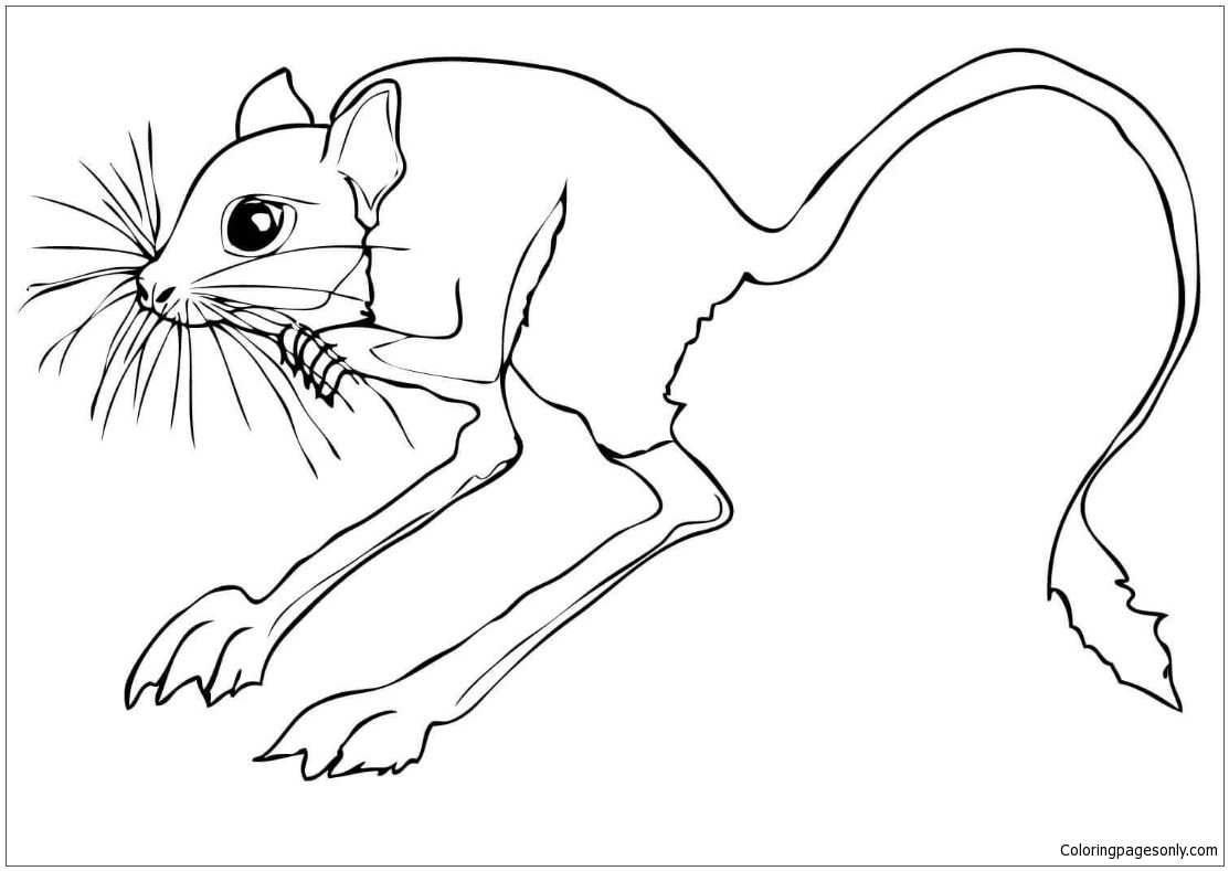 Desert Rodent Jerboa Coloring Page Animal Coloring Pages Desert Animals Coloring Coloring Pages