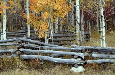Diy Stand Alone Log Fence Log Fence Landscape Timbers Diy Fence