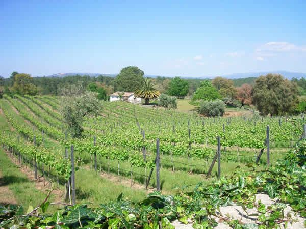 Albergue do Bonjardim Bed and Breakfast, Portugal. A small vineyard dating back to the year 1756. Enjoy some of our organic wine on the terrace