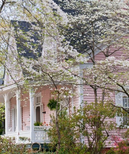 pink house, white trim, white blooms