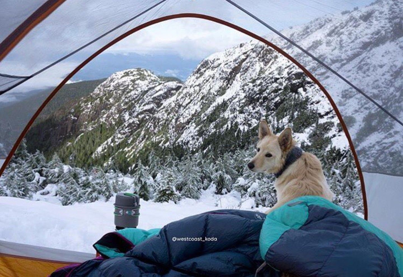//c&ingtentslovers.com/alps-mountaineering-lynx-1- & http://campingtentslovers.com/alps-mountaineering-lynx-1-person ...