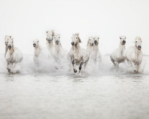 Pin By Cheryl Cruz On N A T U R E Horse Photography Wild Horses Running White Horses