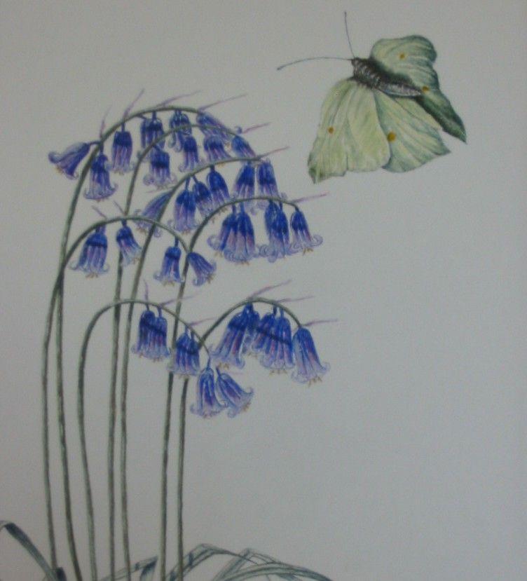 Bluebell and Brimstone (Hyacinthoides non scripta
