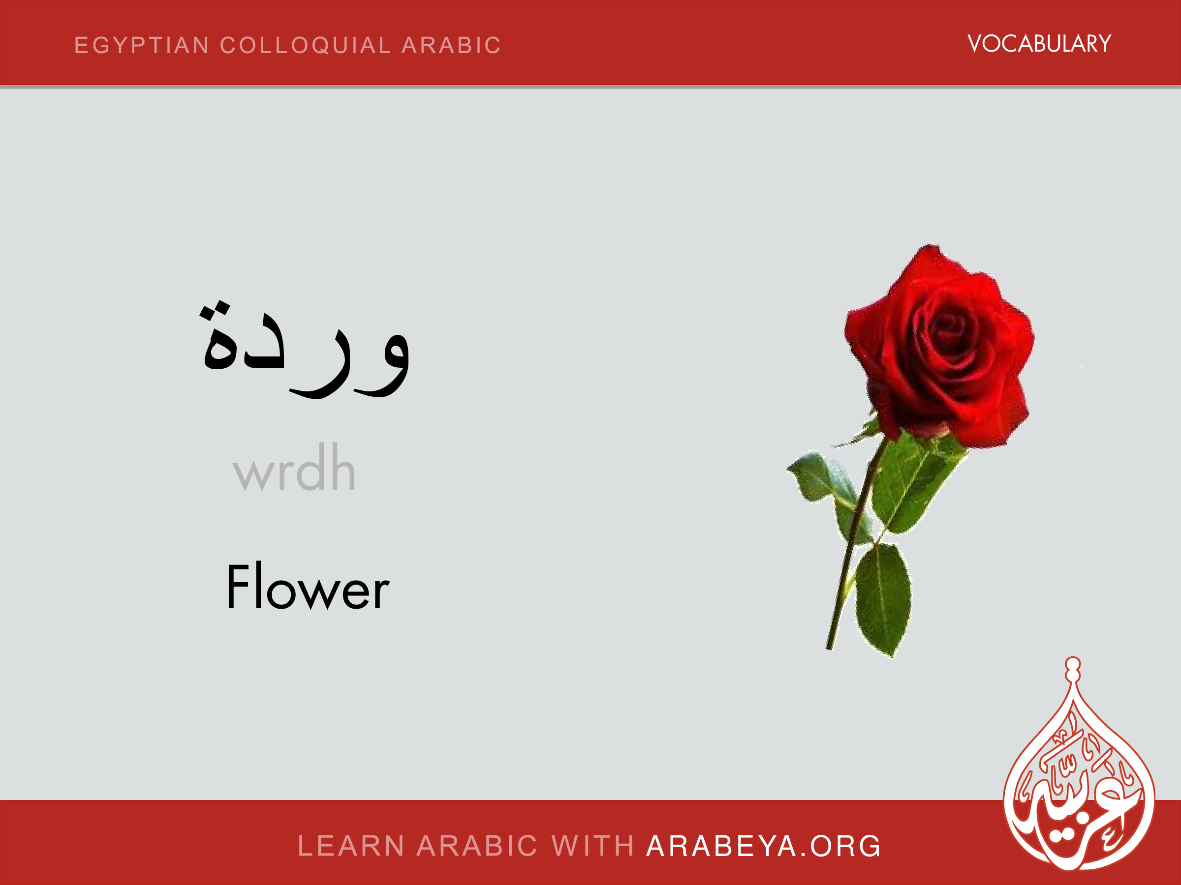 Flower | Egyptian Colloquial Arabic Vocabulary | Spoken