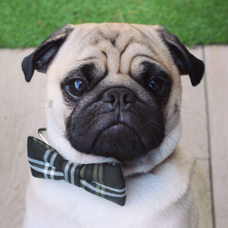 Dog Bowtie Dog Costume Cat Bowtie Dog Bow Tie Tartan Bow Tie