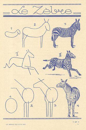 les animaux 87 | Anatomía animal, Dibujar y Trazos