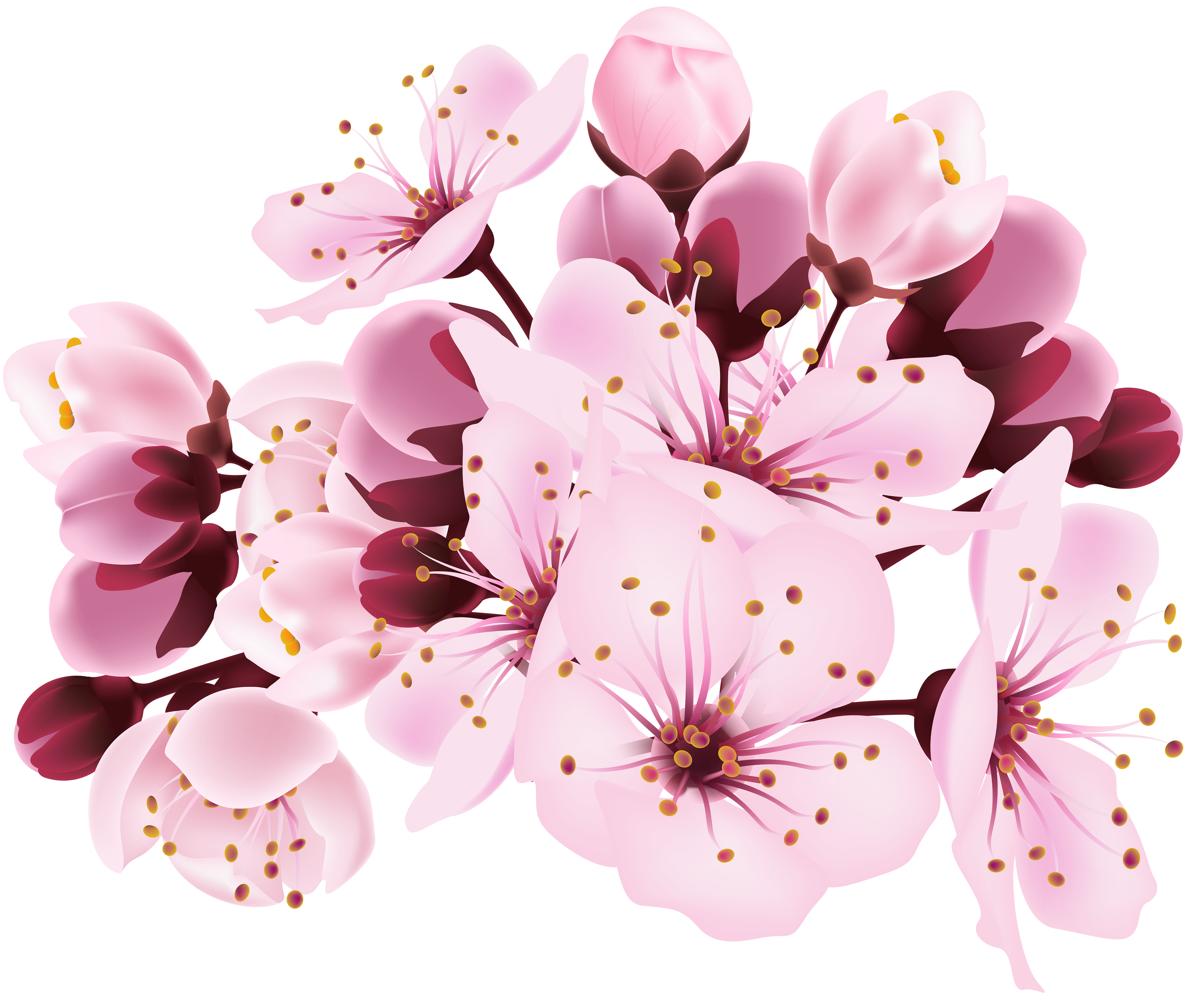 Cherry Blossom Decorative Transparent Image Gallery Yopriceville High Quality Images And Transpa Cherry Blossom Wedding Invitations Blossom Cherry Blossom