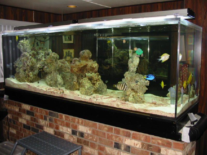 Aquariums From Tanked Aquarium Lethargic Betta Fish Tank Divider Salt Source Link