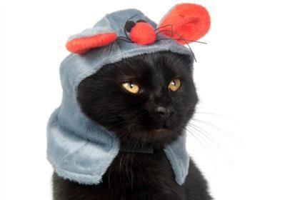 Cats Make Us Crack Up