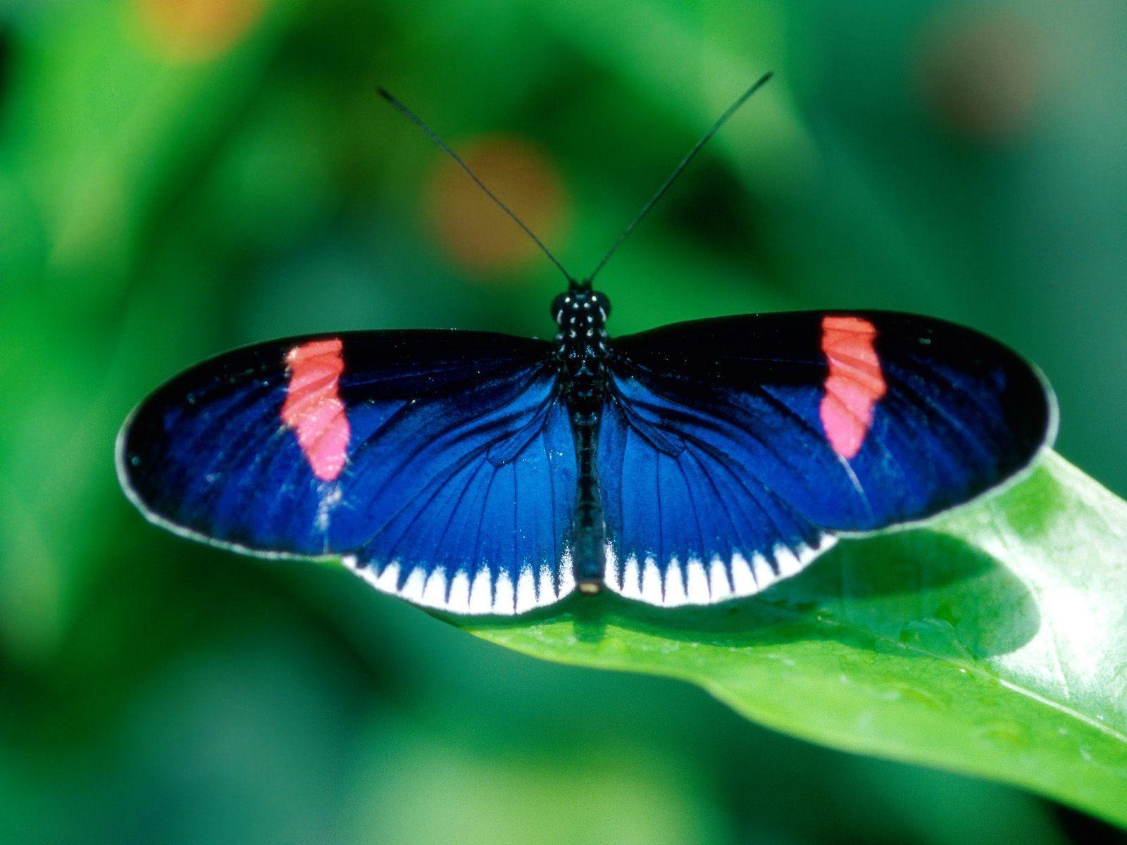 Butterflies   Beautiful Butterflies - Butterflies Wallpaper (9481269) - Fanpop ...