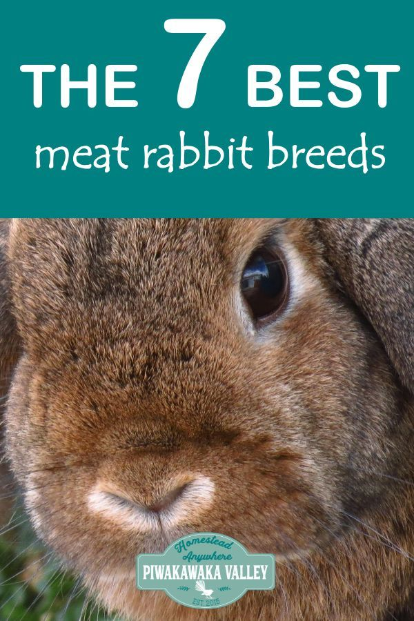Best Rabbits for the Homestead | Meat rabbits, Rabbit ...