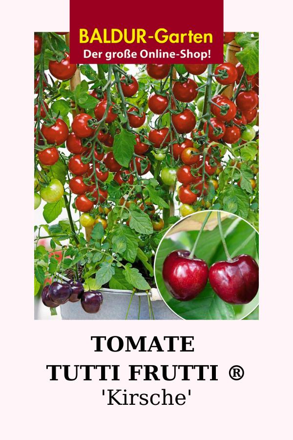 Tomate Tutti Frutti Kirsche Tomaten Bei Baldur Garten In 2020 Tomaten Erntezeit Tomaten Ernten