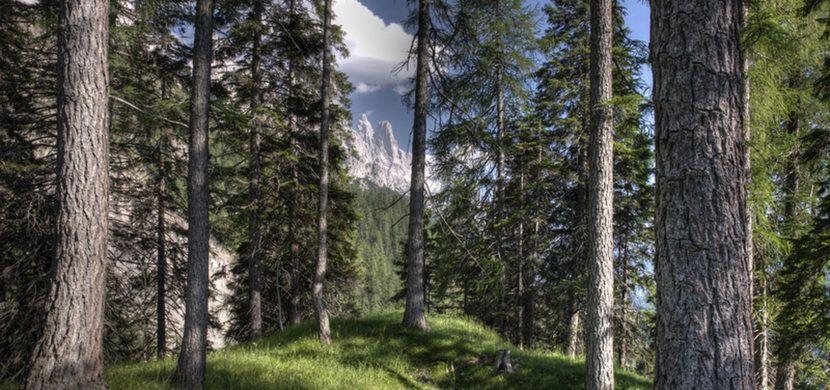 Vacanze Trentino - Vita Nova Hotels - Trentino Wellness e benessere - #webdesign