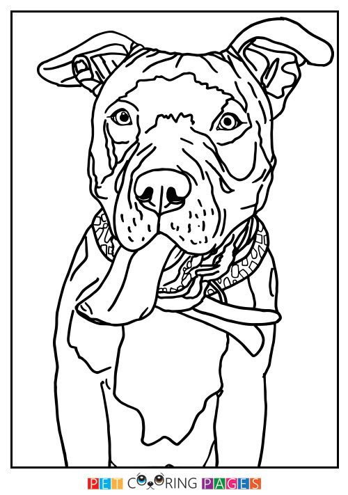American Pit Bull Terrier Coloring Page | Pit Bull | Pinterest ...