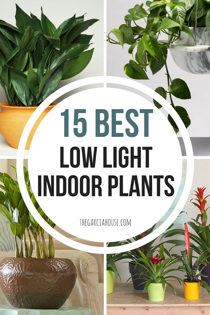 Indoor Plants That Need Little Light Interior Design Ideas