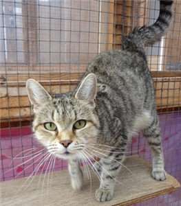 Paula Needs A Home With A Loving Family Who Have Time To Play With And Fuss Her Cat Adoption Cats Animals
