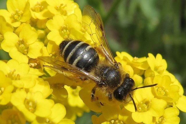 Begin Beekeeping - bees #beekeeping #bees #honeybees # ...