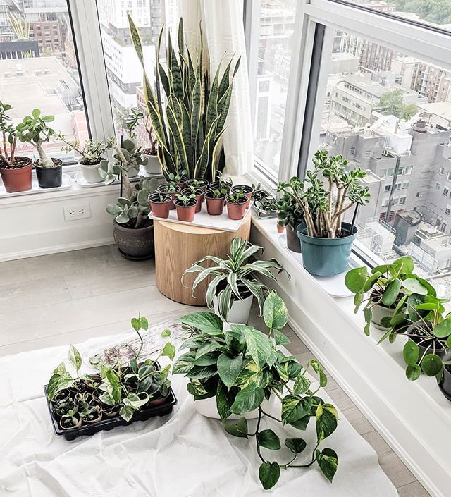 Sunday loft planting Photo by houseplantgal Plants
