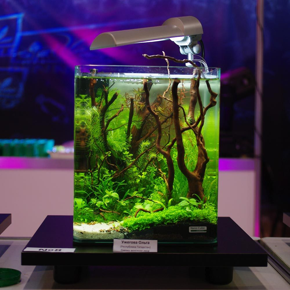 id es et astuces comment cr er un nano aquarium aquarium. Black Bedroom Furniture Sets. Home Design Ideas