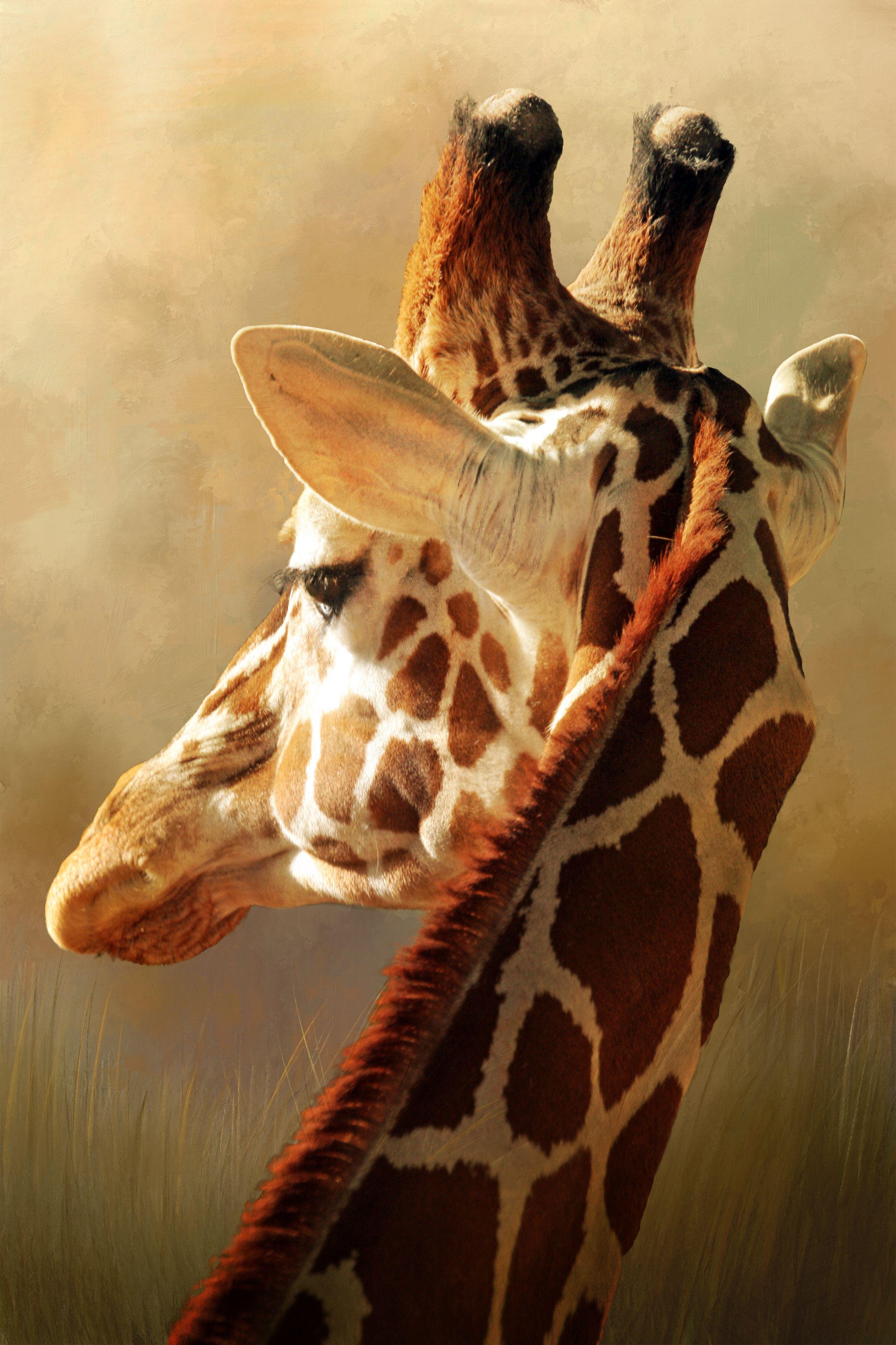 Giraffe, Tucson Zoo Giraffe, Animal parade, Urban icon