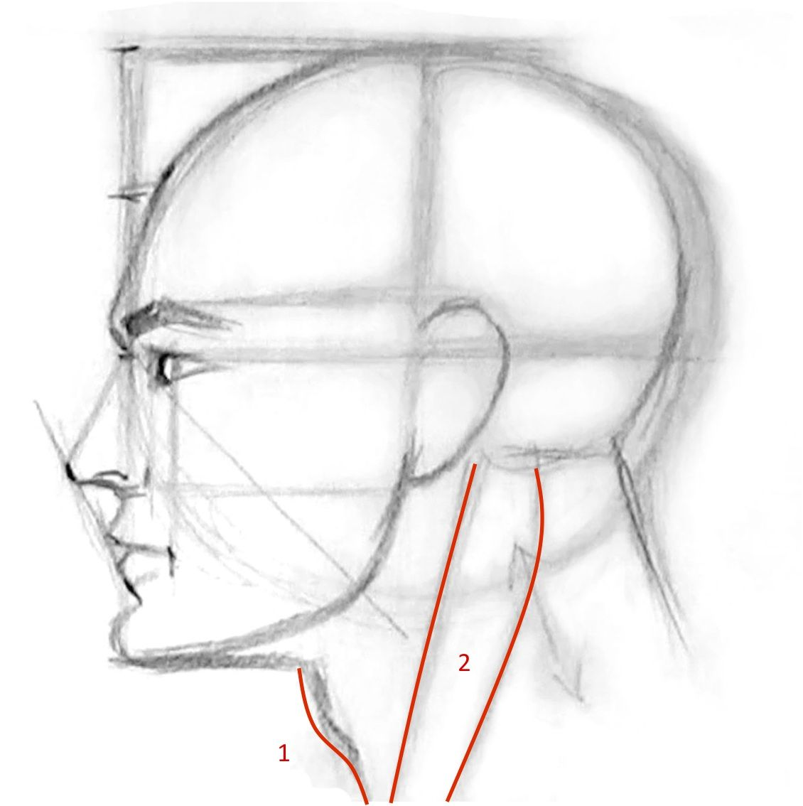 How to draw a man face profile